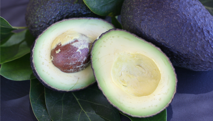 Morro Bay Avocado